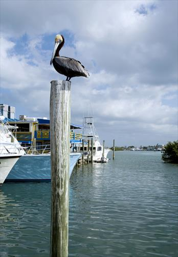 22' boat slip for rent - Whale Harbor Marina - Islamorada, FL